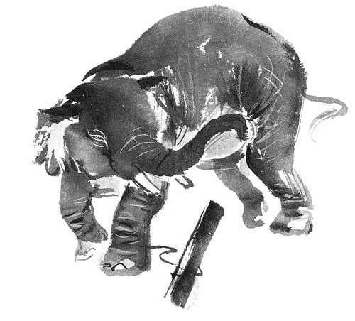 GBWOL elephant large